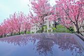 櫻。希望之河:IMG_8371.jpg