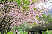 櫻。三生步道:IMG_8396.jpg