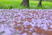紫の浪漫。:IMG_8577.jpg