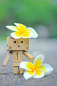 雞蛋花。:IMG_9466.jpg