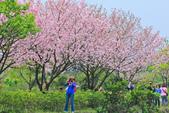 櫻。三生步道:IMG_8404.jpg