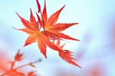 槭紅。:IMG_8698.jpg