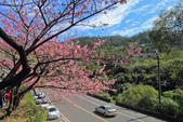 櫻。花園新城:IMG_7574.jpg