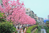 櫻。希望之河:IMG_8346.jpg