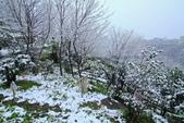 雪。陽明山:IMG_7239.jpg