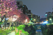 櫻。希望之河:IMG_8508.jpg