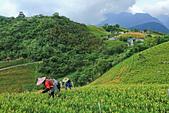 六十石山の金針花季。:IMG_10490.jpg