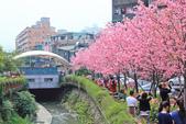 櫻。希望之河:IMG_8348.jpg