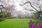 櫻。陽明山:IMG_8676.jpg