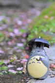 櫻。陽明山:IMG_8751.jpg