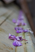 紫藤の恋。:IMG_3344.jpg