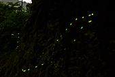 夜。螢火蟲:IMG_9691.jpg