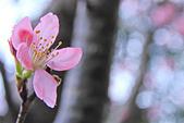 昭和櫻。:IMG_7856.jpg