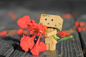鳳凰花開。:IMG_9047.jpg