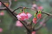 櫻。花園新城:IMG_7579.jpg