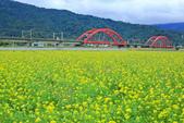 花東縱谷。油菜花:IMG_12442-8.jpg