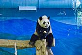 遊。木柵動物園:IMG_0042.jpg