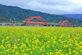 花東縱谷。油菜花:IMG_12443-9.jpg