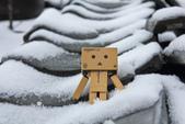 雪。陽明山:IMG_7178.jpg