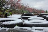 雪。陽明山:IMG_7175.jpg