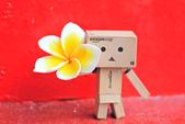 雞蛋花。:IMG_9475.jpg