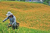 六十石山の金針花季。:IMG_10572.jpg