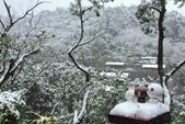雪。陽明山:IMG_7211.jpg