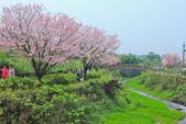 櫻。三生步道:IMG_8405.jpg