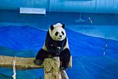 遊。木柵動物園:IMG_0043.jpg