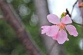 昭和櫻。:IMG_7836.jpg