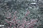 雪。陽明山:IMG_7251.jpg