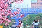 櫻。希望之河:IMG_8364.jpg