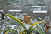 雪。陽明山:IMG_7202.jpg