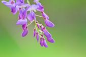 紫の浪漫。:IMG_8572.jpg