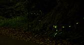 夜。螢火蟲:IMG_9701.jpg