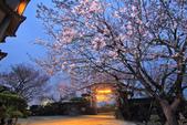 櫻。東方寺:IMG_8459.jpg