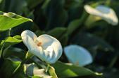 櫻。橘咖啡:IMG_12931.jpg