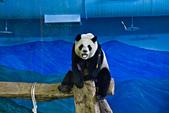 遊。木柵動物園:IMG_0045.jpg