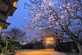 櫻。東方寺:IMG_8460.jpg