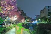 櫻。希望之河:IMG_8509.jpg