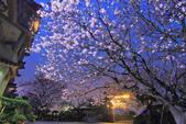 櫻。東方寺:IMG_8465.jpg