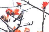 木棉花。:IMG_8719.jpg