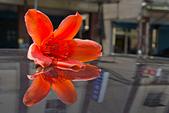 花。木棉:IMG_4913.jpg