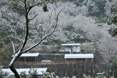 雪。陽明山:IMG_7197.jpg