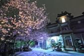 櫻。東方寺:IMG_8472.jpg