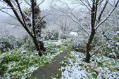 雪。陽明山:IMG_7235.jpg