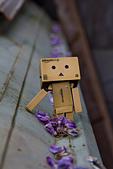紫藤の恋。:IMG_3348.jpg
