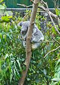 遊。木柵動物園:IMG_0002.jpg