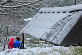 雪。陽明山:IMG_7256.jpg