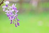 紫の浪漫。:IMG_8573.jpg